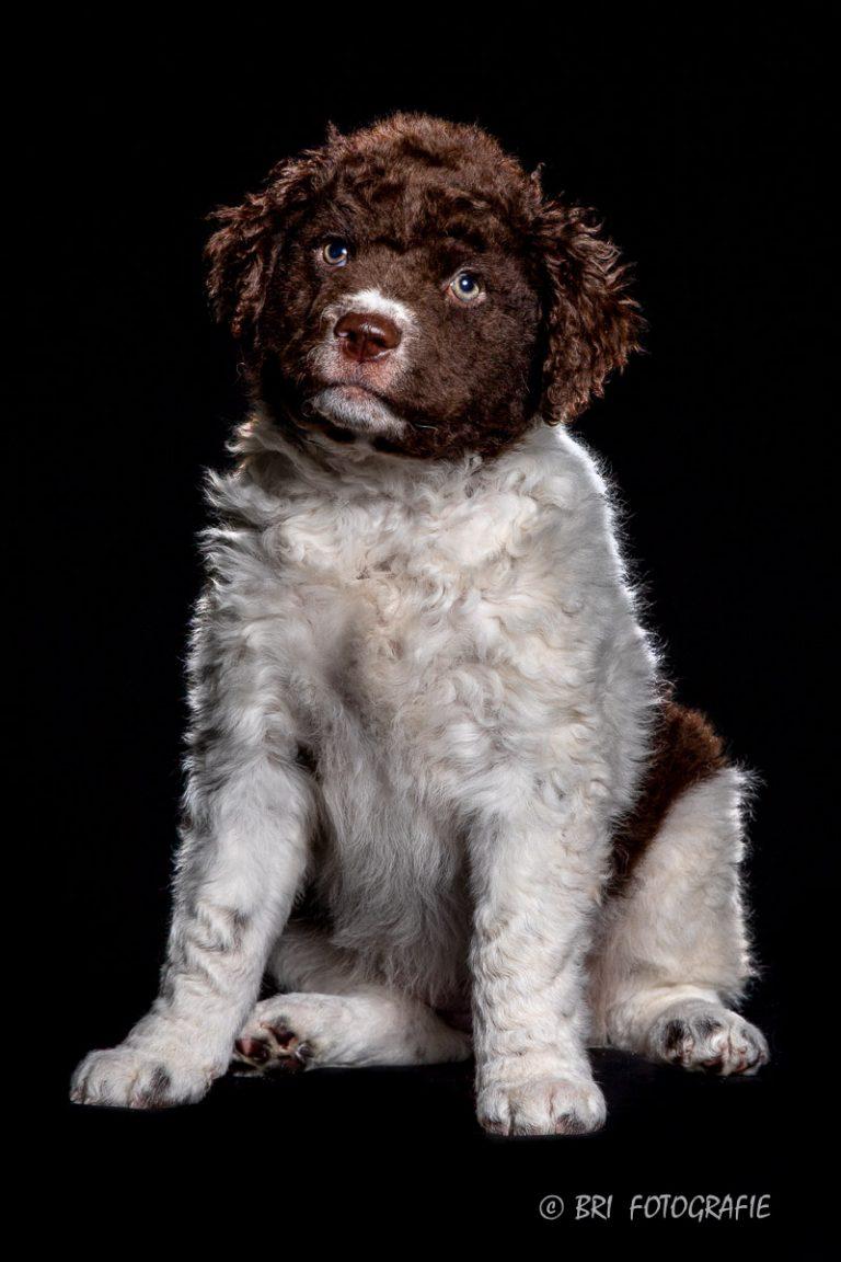 puppy shoot
