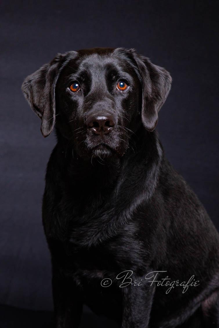 portretfoto hond
